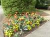 tulips_05