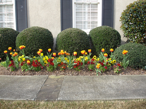 tulips_02