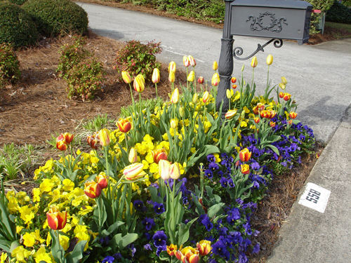 tulips_04